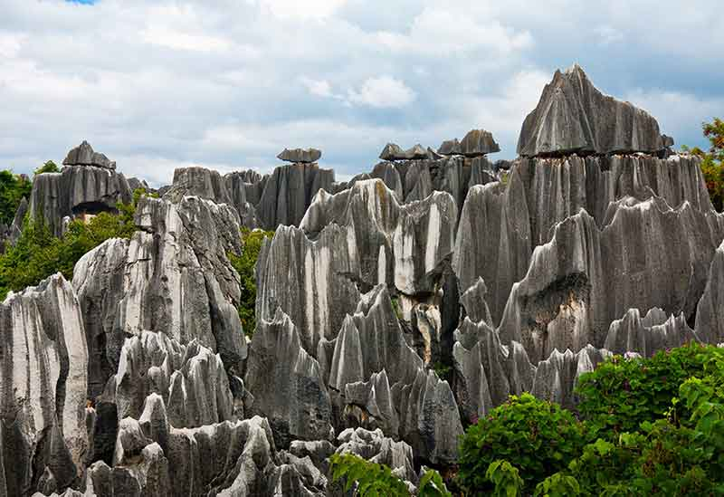 Stone-Forest-