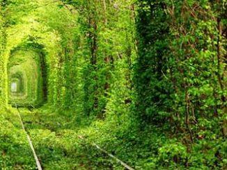 travel-green